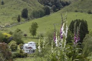 Makahu Farm
